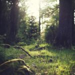 forest-653448_640
