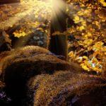 landscape-1042468_640